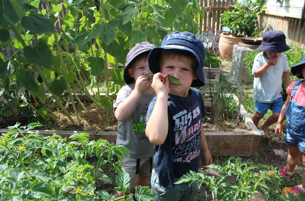Kids get into the garden as part of providing a healthy learning environment