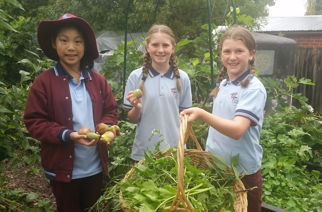 Playground To Plate Grants Scheme Helping To Grow Healthy Schools