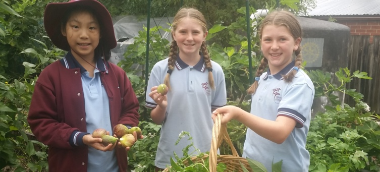 Playground to Plate grants scheme - helping to grow healthy schools